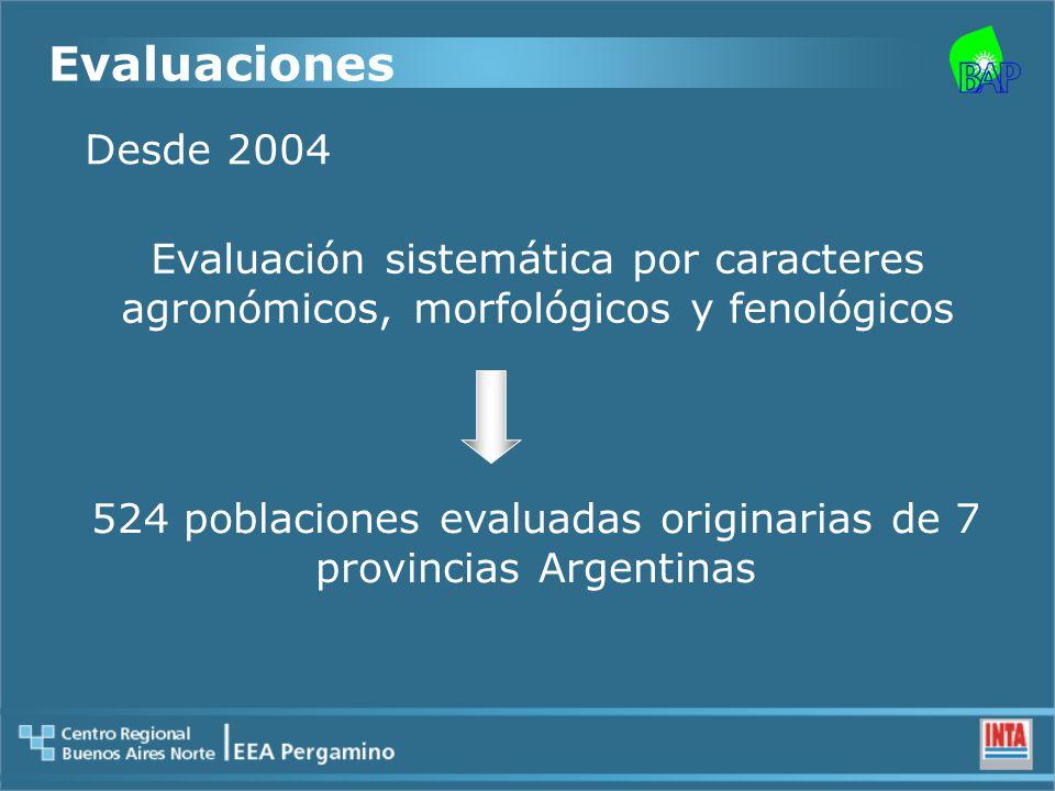 Evaluaciones Desde 2004 Evaluación sistemática por caracteres agronómicos, morfológicos y fenológicos 524 poblaciones evaluadas originarias de 7 provincias Argentinas