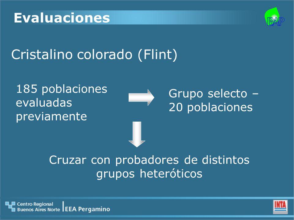 Cristalino colorado (Flint) 185 poblaciones evaluadas previamente Grupo selecto – 20 poblaciones Cruzar con probadores de distintos grupos heteróticos Evaluaciones