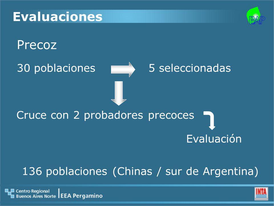 Precoz 30 poblaciones5 seleccionadas Cruce con 2 probadores precoces Evaluación 136 poblaciones (Chinas / sur de Argentina) Evaluaciones