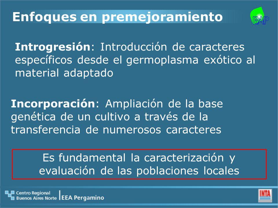 Introgresión: Introducción de caracteres específicos desde el germoplasma exótico al material adaptado Incorporación: Ampliación de la base genética de un cultivo a través de la transferencia de numerosos caracteres Enfoques en premejoramiento Es fundamental la caracterización y evaluación de las poblaciones locales