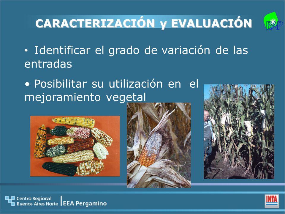 CARACTERIZACIÓN y EVALUACIÓN Identificar el grado de variación de las entradas Posibilitar su utilización en el mejoramiento vegetal