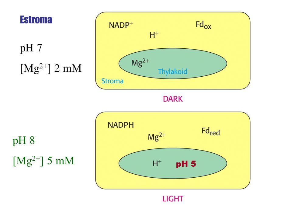 pH 7 [Mg 2+ ] 2 mM pH 8 [Mg 2+ ] 5 mM Estroma pH 5