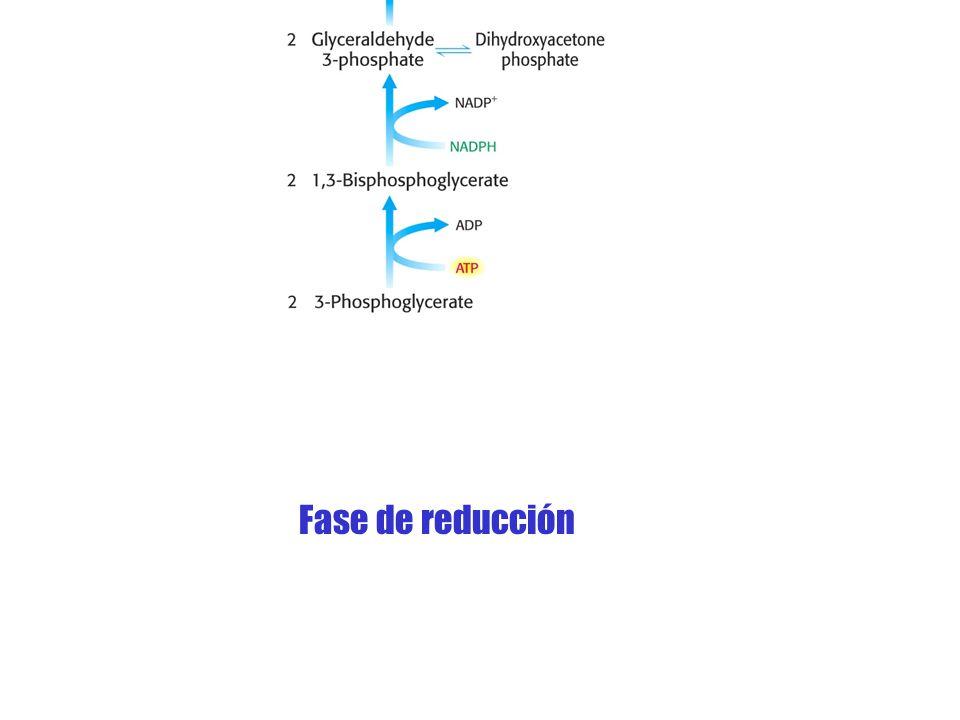 Fase de reducción