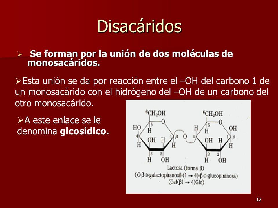 12 Disacáridos  Se forman por la unión de dos moléculas de monosacáridos.