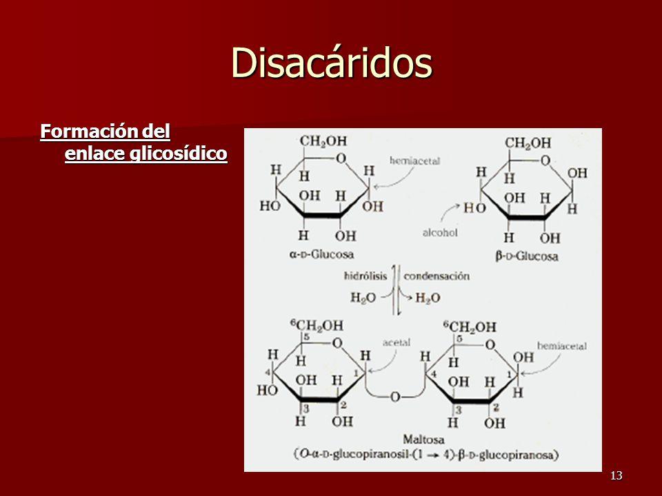 13 Disacáridos Formación del enlace glicosídico