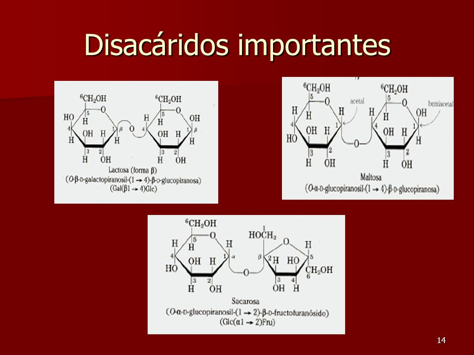 14 Disacáridos importantes
