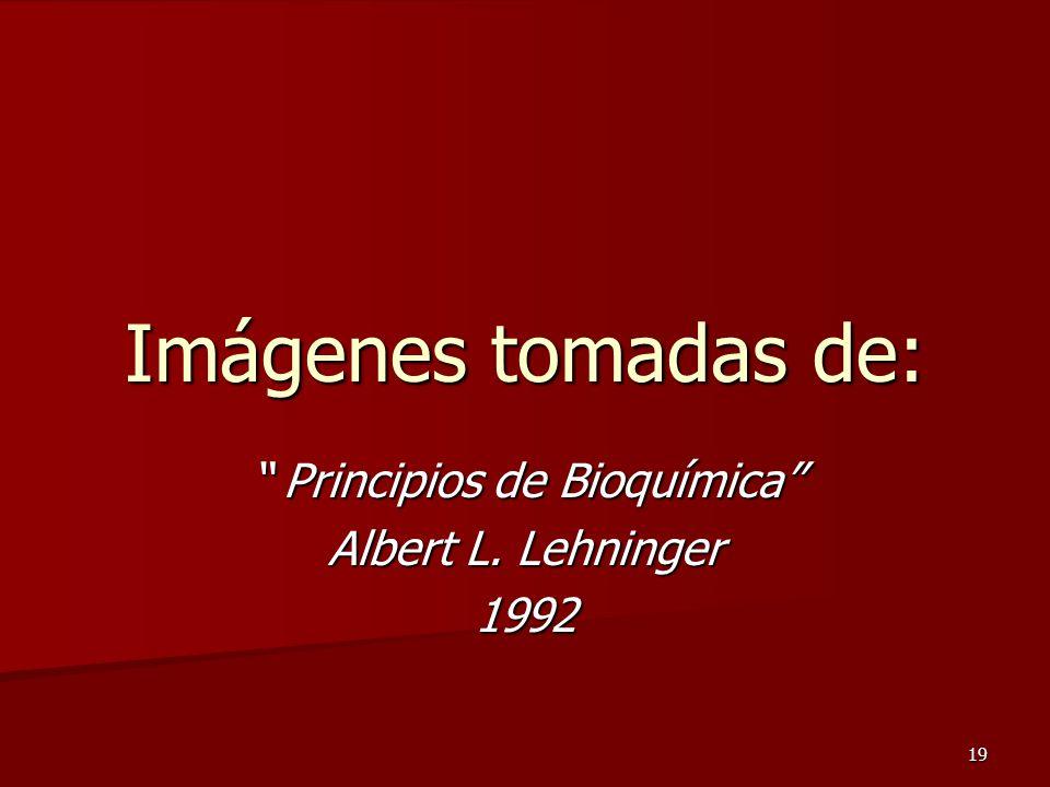 19 Imágenes tomadas de: Principios de Bioquímica Albert L. Lehninger 1992