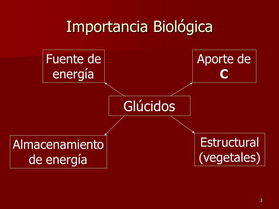 3 Importancia Biológica Glúcidos Fuente de energía Aporte de C Almacenamiento de energía Estructural (vegetales)