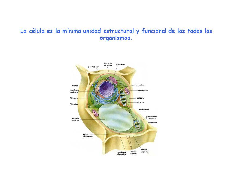 La célula es la mínima unidad estructural y funcional de los todos los organismos.