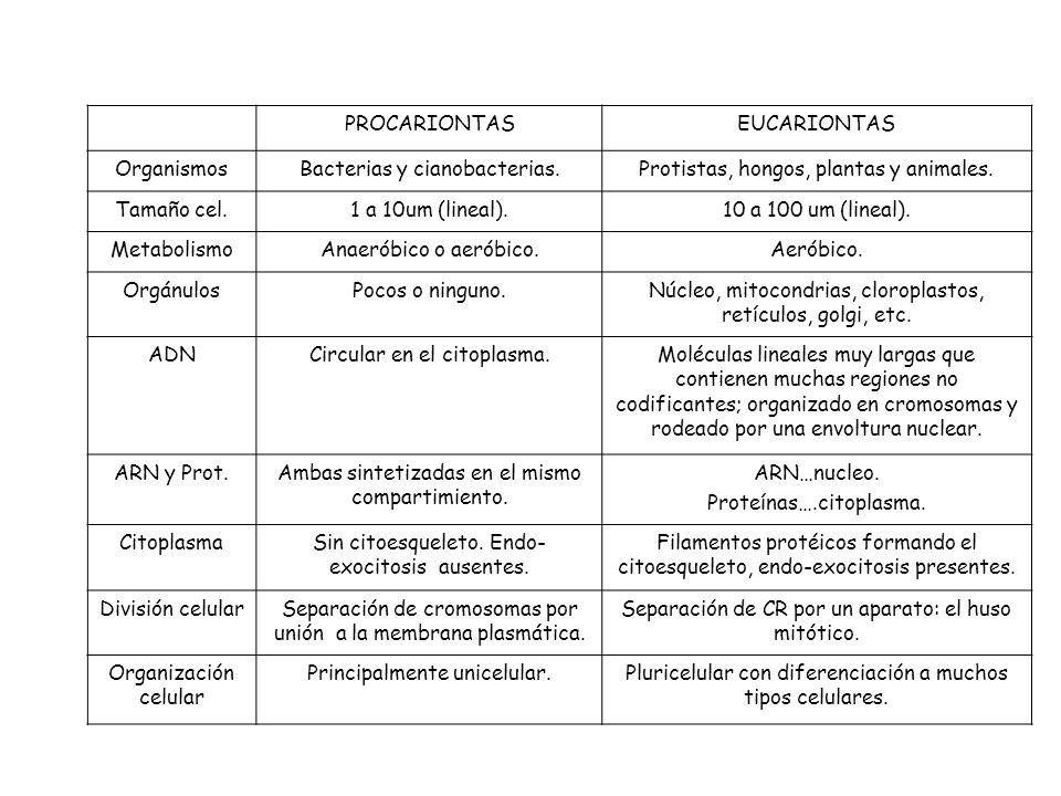 PROCARIONTASEUCARIONTAS OrganismosBacterias y cianobacterias.Protistas, hongos, plantas y animales.