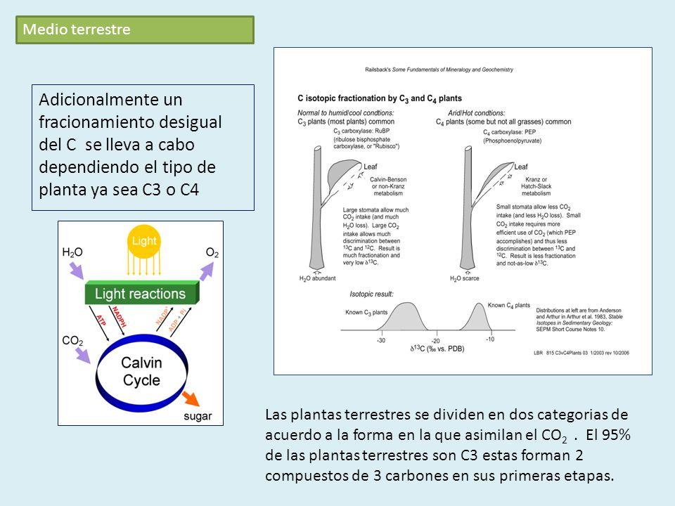 Adicionalmente un fracionamiento desigual del C se lleva a cabo dependiendo el tipo de planta ya sea C3 o C4 Las plantas terrestres se dividen en dos categorias de acuerdo a la forma en la que asimilan el CO 2.
