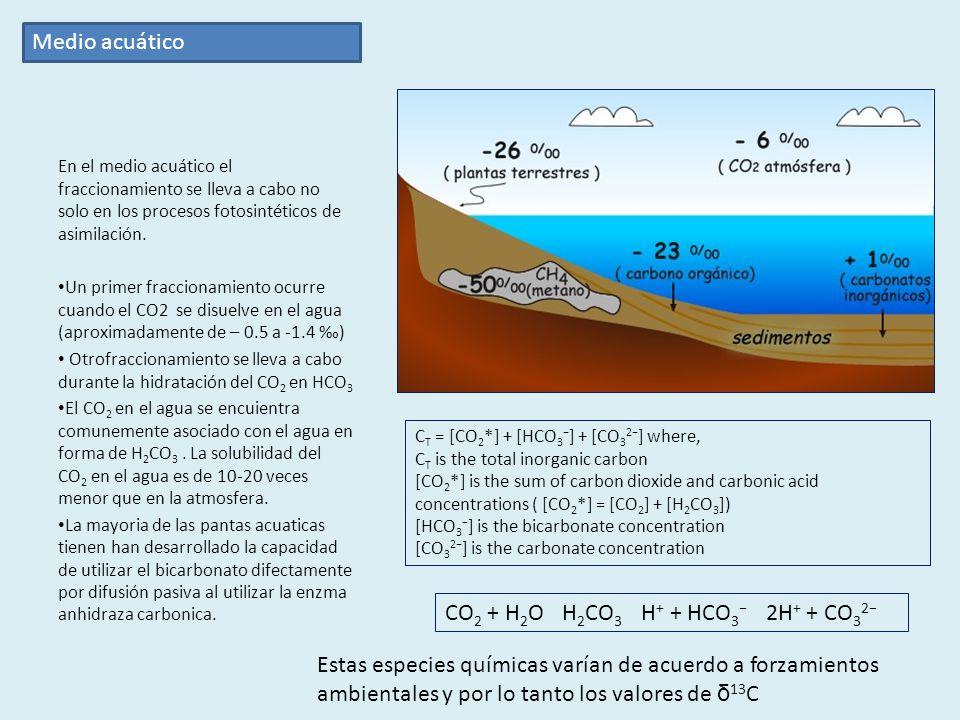 En el medio acuático el fraccionamiento se lleva a cabo no solo en los procesos fotosintéticos de asimilación.