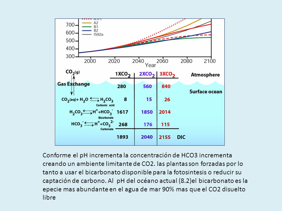 Conforme el pH incrementa la concentración de HCO3 incrementa creando un ambiente limitante de CO2.