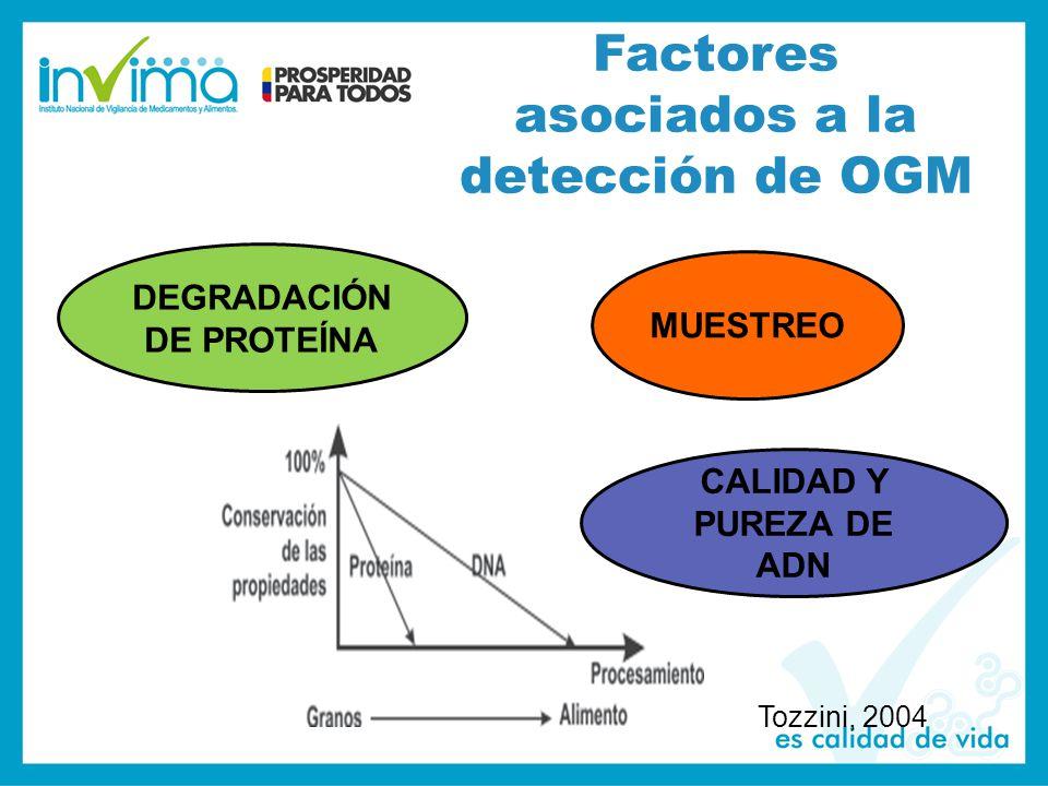 Factores asociados a la detección de OGM Tozzini, 2004 MUESTREO DEGRADACIÓN DE PROTEÍNA CALIDAD Y PUREZA DE ADN