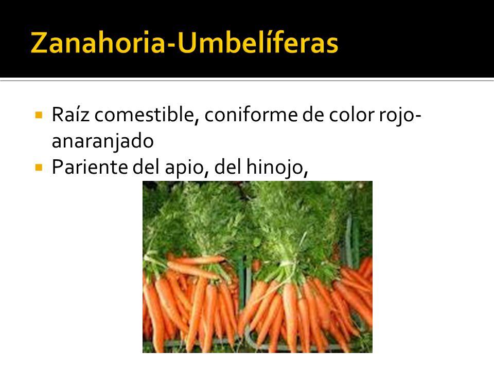  Raíz comestible, coniforme de color rojo- anaranjado  Pariente del apio, del hinojo,