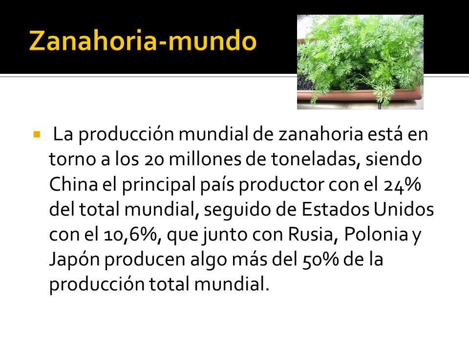  La producción mundial de zanahoria está en torno a los 20 millones de toneladas, siendo China el principal país productor con el 24% del total mundial, seguido de Estados Unidos con el 10,6%, que junto con Rusia, Polonia y Japón producen algo más del 50% de la producción total mundial.