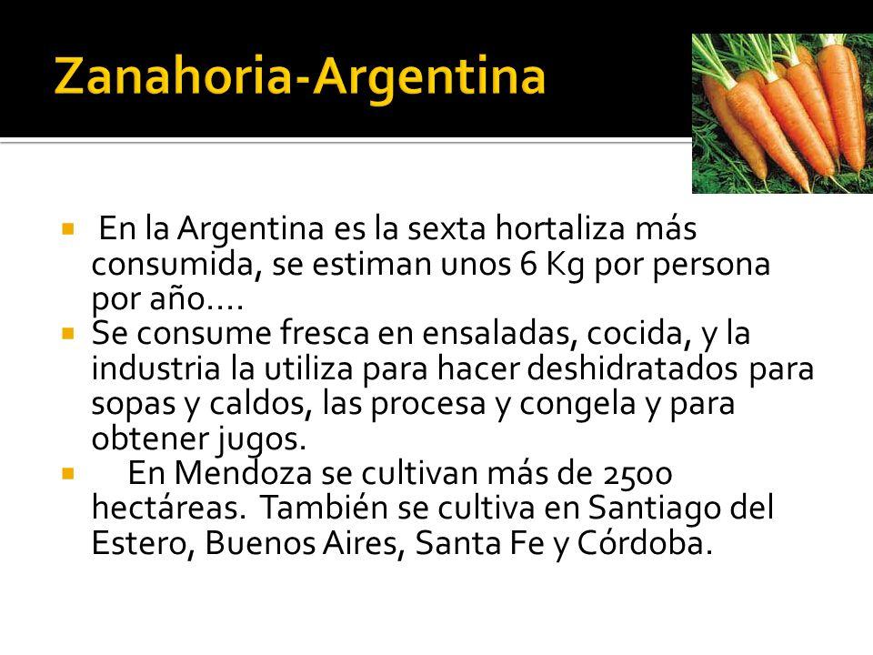  En la Argentina es la sexta hortaliza más consumida, se estiman unos 6 Kg por persona por año....