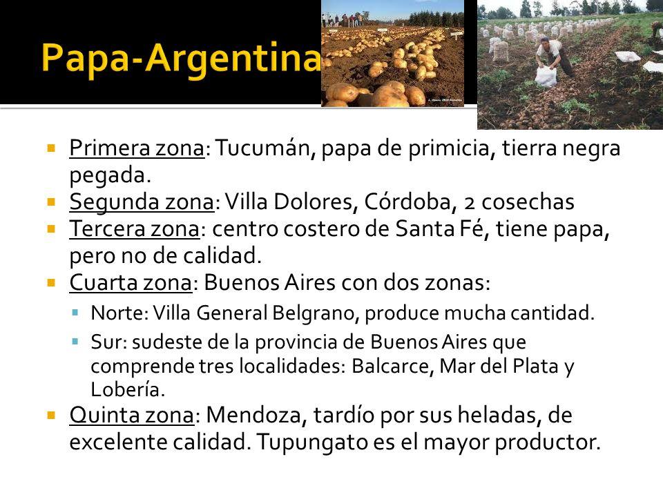  Primera zona: Tucumán, papa de primicia, tierra negra pegada.