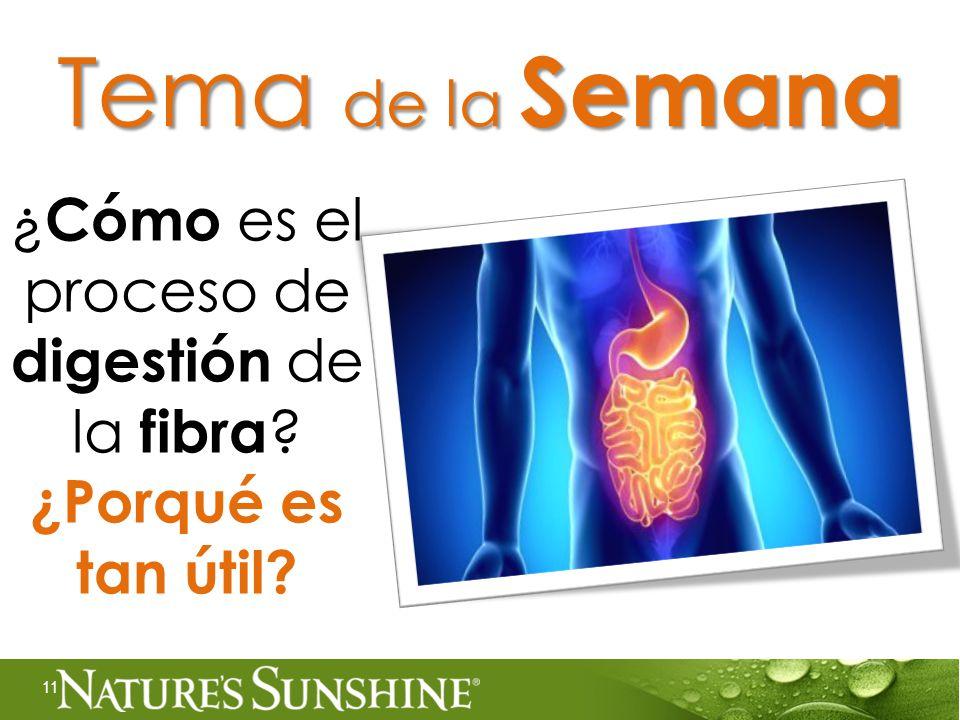 ¿ Cómo es el proceso de digestión de la fibra ¿Porqué es tan útil 11 Tema de la Semana