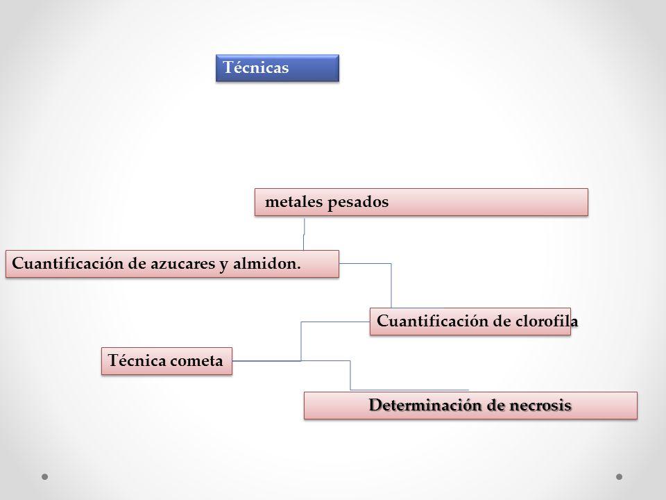 Técnicas metales pesados Cuantificación de azucares y almidon.