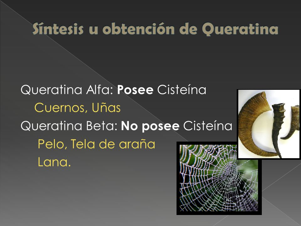 Queratina Alfa: Posee Cisteína Cuernos, Uñas Queratina Beta: No posee Cisteína Pelo, Tela de araña Lana.