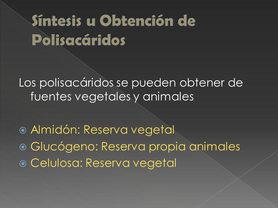Los polisacáridos se pueden obtener de fuentes vegetales y animales  Almidón: Reserva vegetal  Glucógeno: Reserva propia animales  Celulosa: Reserva vegetal
