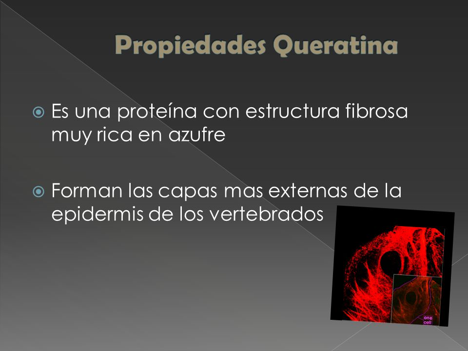  Es una proteína con estructura fibrosa muy rica en azufre  Forman las capas mas externas de la epidermis de los vertebrados