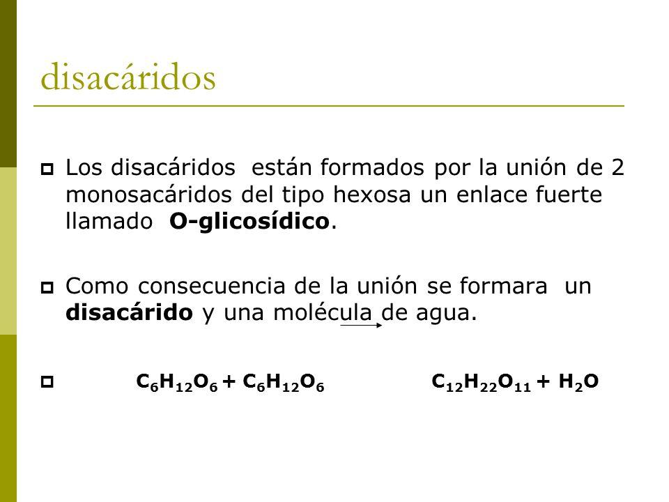 disacáridos  Los disacáridos están formados por la unión de 2 monosacáridos del tipo hexosa un enlace fuerte llamado O-glicosídico.