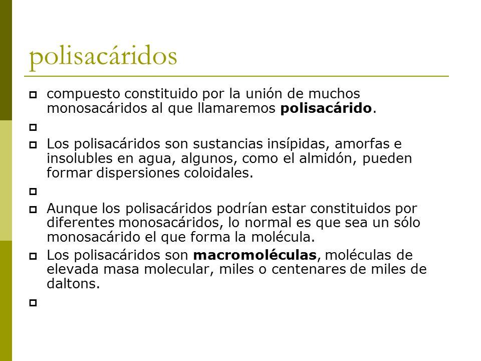 polisacáridos  compuesto constituido por la unión de muchos monosacáridos al que llamaremos polisacárido.