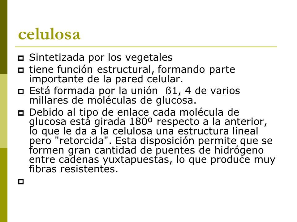 celulosa  Sintetizada por los vegetales  tiene función estructural, formando parte importante de la pared celular.