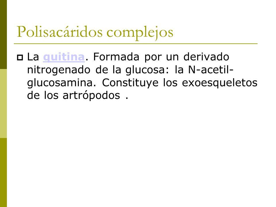 Polisacáridos complejos  La quitina.
