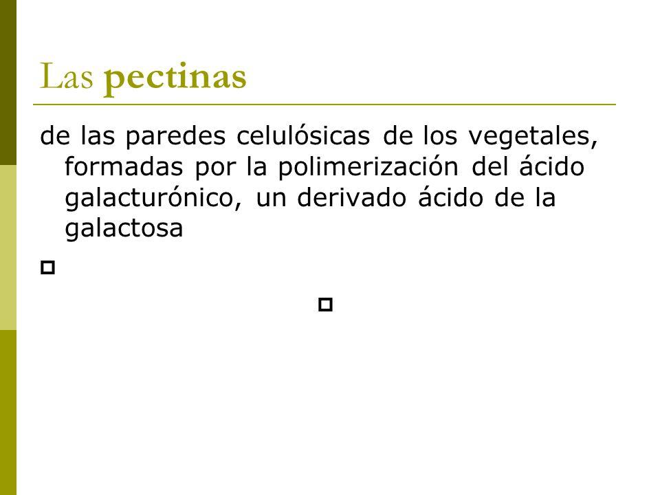 Las pectinas de las paredes celulósicas de los vegetales, formadas por la polimerización del ácido galacturónico, un derivado ácido de la galactosa 