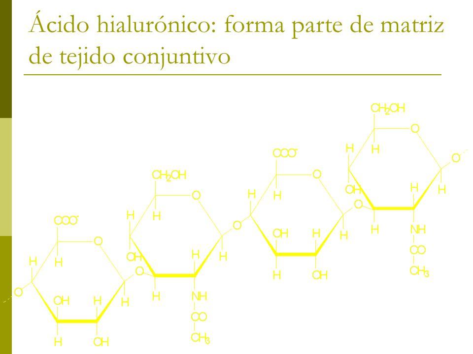 Ácido hialurónico: forma parte de matriz de tejido conjuntivo