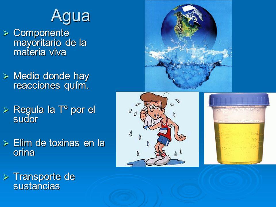 Agua  Componente mayoritario de la materia viva  Medio donde hay reacciones quím.
