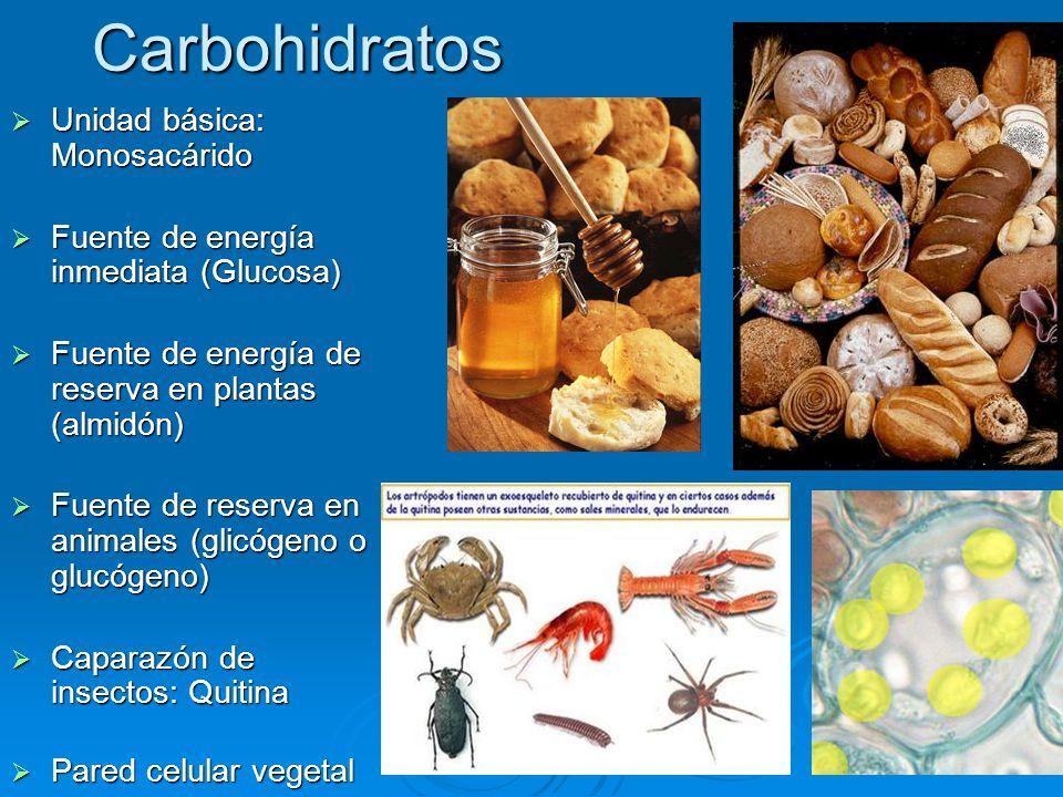 Carbohidratos  Unidad básica: Monosacárido  Fuente de energía inmediata (Glucosa)  Fuente de energía de reserva en plantas (almidón)  Fuente de reserva en animales (glicógeno o glucógeno)  Caparazón de insectos: Quitina  Pared celular vegetal
