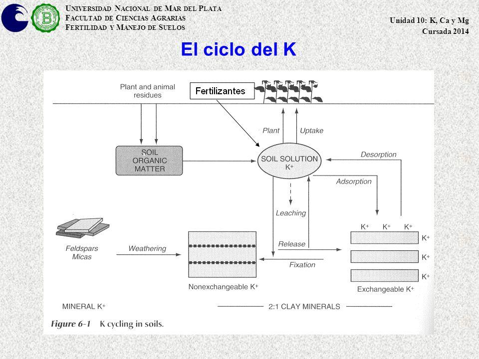 El ciclo del K U NIVERSIDAD N ACIONAL DE M AR DEL P LATA F ACULTAD DE C IENCIAS A GRARIAS F ERTILIDAD Y M ANEJO DE S UELOS Unidad 10: K, Ca y Mg Cursada 2014