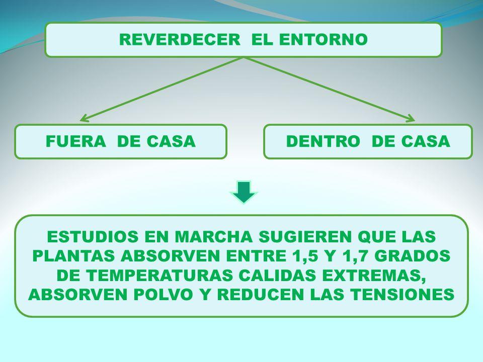 REVERDECER EL ENTORNO FUERA DE CASADENTRO DE CASA ESTUDIOS EN MARCHA SUGIEREN QUE LAS PLANTAS ABSORVEN ENTRE 1,5 Y 1,7 GRADOS DE TEMPERATURAS CALIDAS EXTREMAS, ABSORVEN POLVO Y REDUCEN LAS TENSIONES
