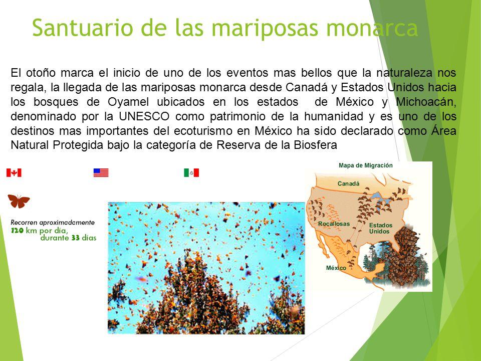 Santuario de las mariposas monarca El otoño marca el inicio de uno de los eventos mas bellos que la naturaleza nos regala, la llegada de las mariposas monarca desde Canadá y Estados Unidos hacia los bosques de Oyamel ubicados en los estados de México y Michoacán, denominado por la UNESCO como patrimonio de la humanidad y es uno de los destinos mas importantes del ecoturismo en México ha sido declarado como Área Natural Protegida bajo la categoría de Reserva de la Biosfera