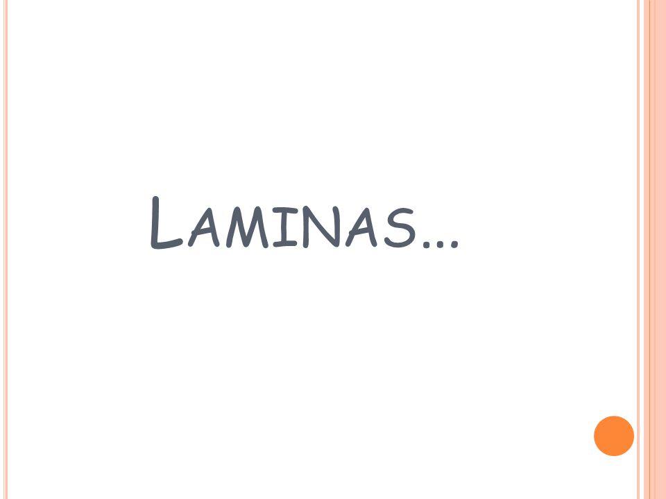 L AMINAS …