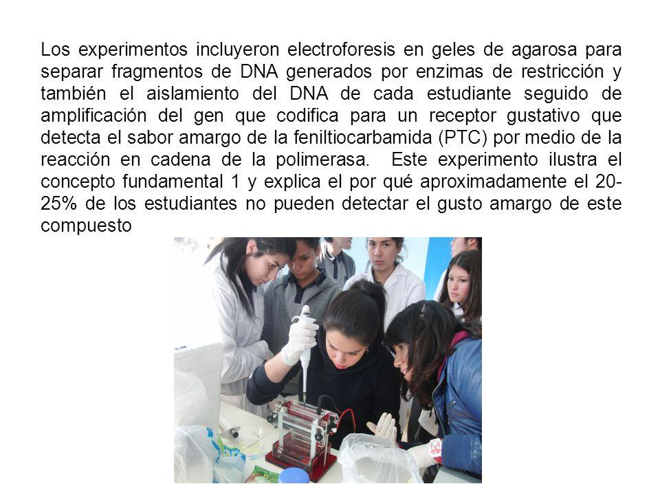 Los experimentos incluyeron electroforesis en geles de agarosa para separar fragmentos de DNA generados por enzimas de restricción y también el aislamiento del DNA de cada estudiante seguido de amplificación del gen que codifica para un receptor gustativo que detecta el sabor amargo de la feniltiocarbamida (PTC) por medio de la reacción en cadena de la polimerasa.