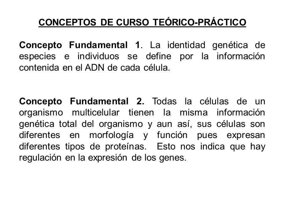 CONCEPTOS DE CURSO TEÓRICO-PRÁCTICO Concepto Fundamental 1.