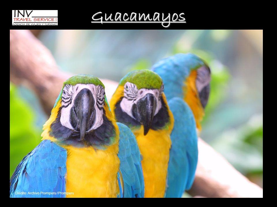 Guacamayos Crédito: Archivo Promperu / Promperu
