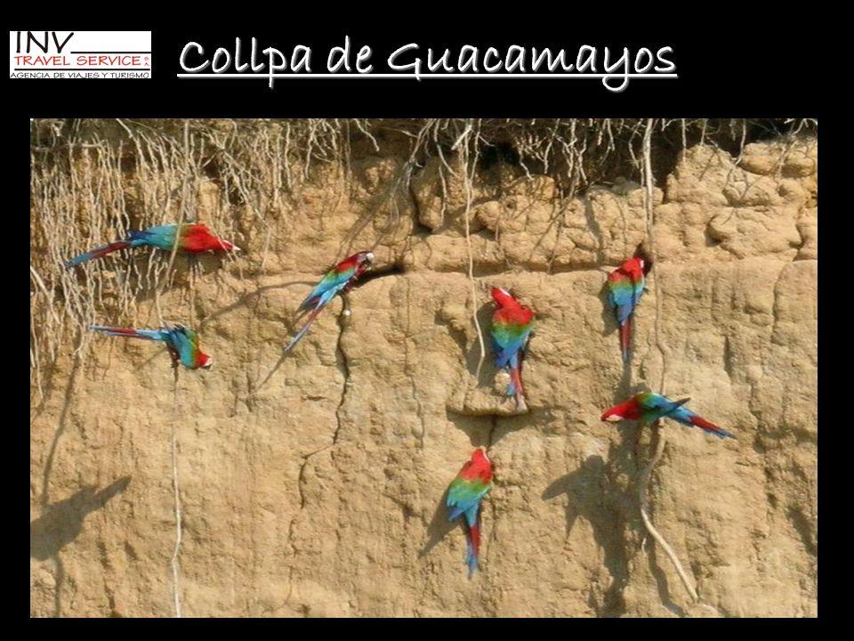 Collpa de Guacamayos