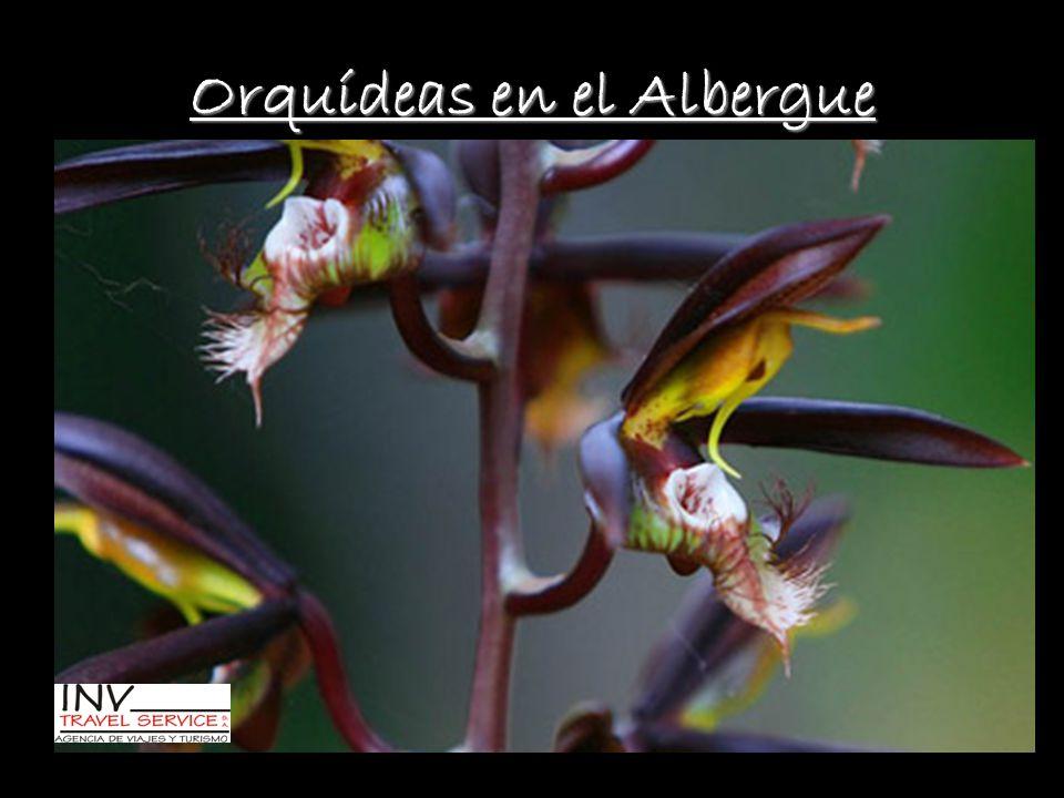 Orquídeas en el Albergue