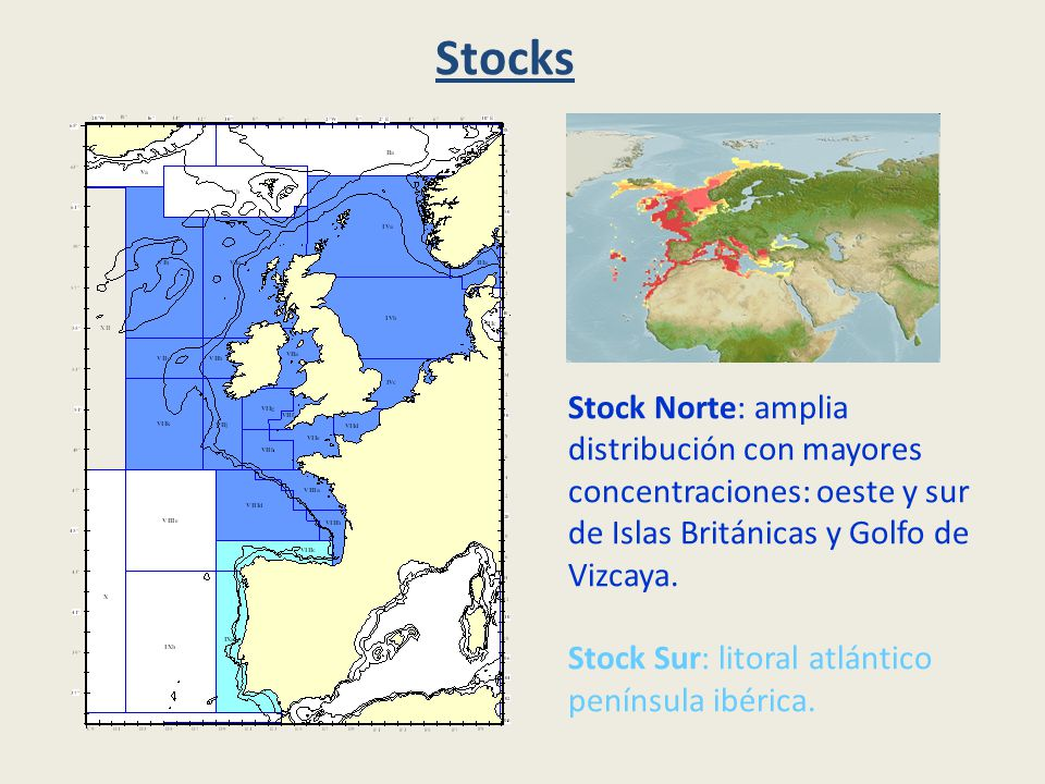 Stocks Stock Norte: amplia distribución con mayores concentraciones: oeste y sur de Islas Británicas y Golfo de Vizcaya.