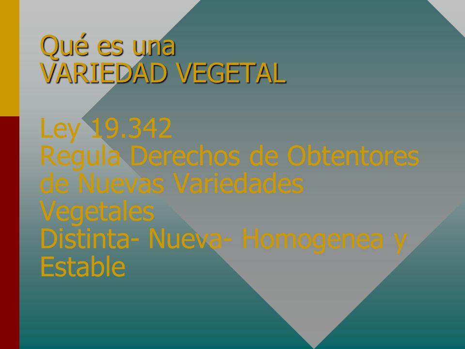 Qué es una VARIEDAD VEGETAL Qué es una VARIEDAD VEGETAL Ley 19.342 Regula Derechos de Obtentores de Nuevas Variedades Vegetales Distinta- Nueva- Homogenea y Estable