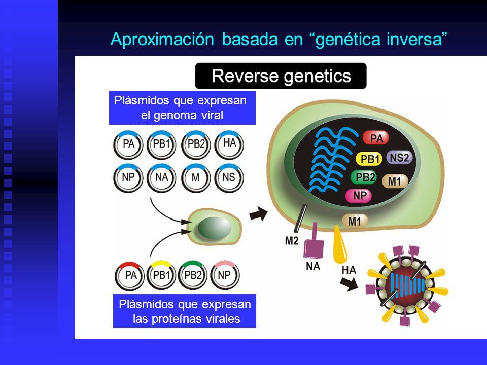 Aproximación basada en genética inversa Plásmidos que expresan el genoma viral Plásmidos que expresan las proteínas virales
