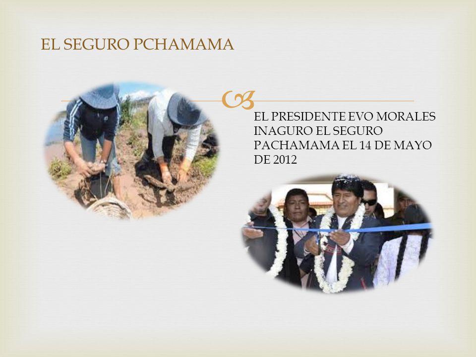  EL SEGURO PCHAMAMA EL PRESIDENTE EVO MORALES INAGURO EL SEGURO PACHAMAMA EL 14 DE MAYO DE 2012