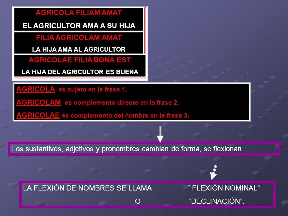 AGRICOLA es sujeto en la frase 1. AGRICOLAM es complemento directo en la frase 2.
