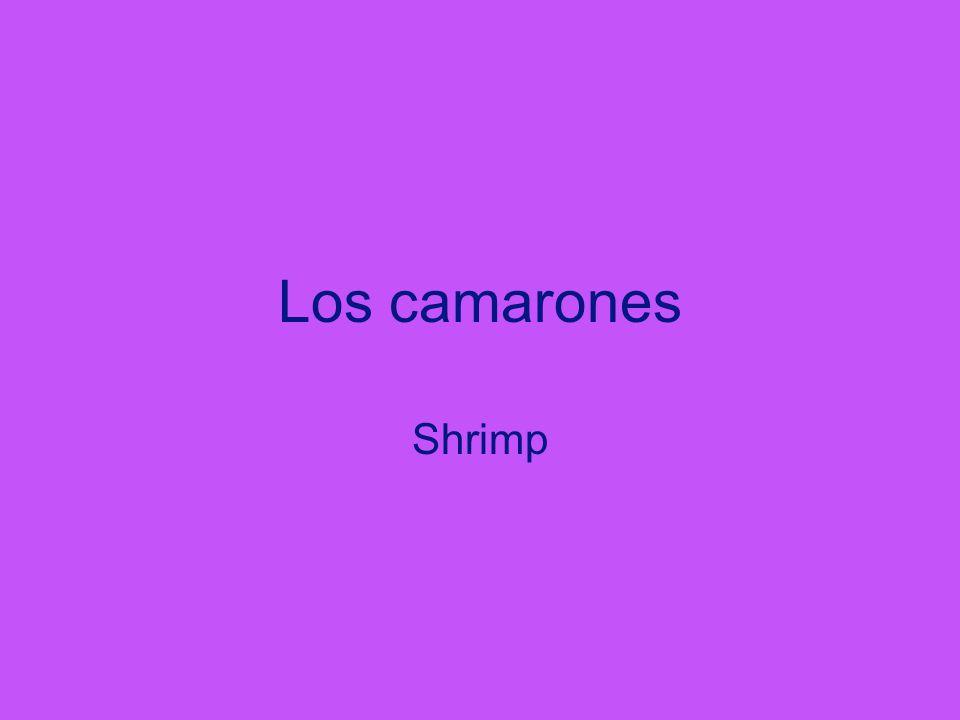 Los camarones Shrimp